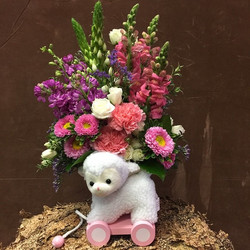 Baby girl lamb CD034