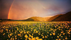 meadows-mountains prairiewildflowers-yel