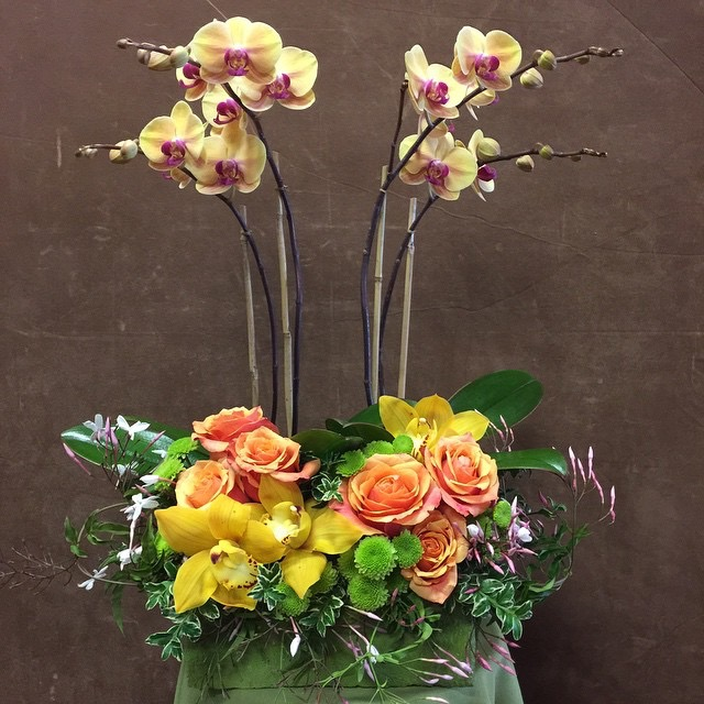 Orchid spikes arrangement