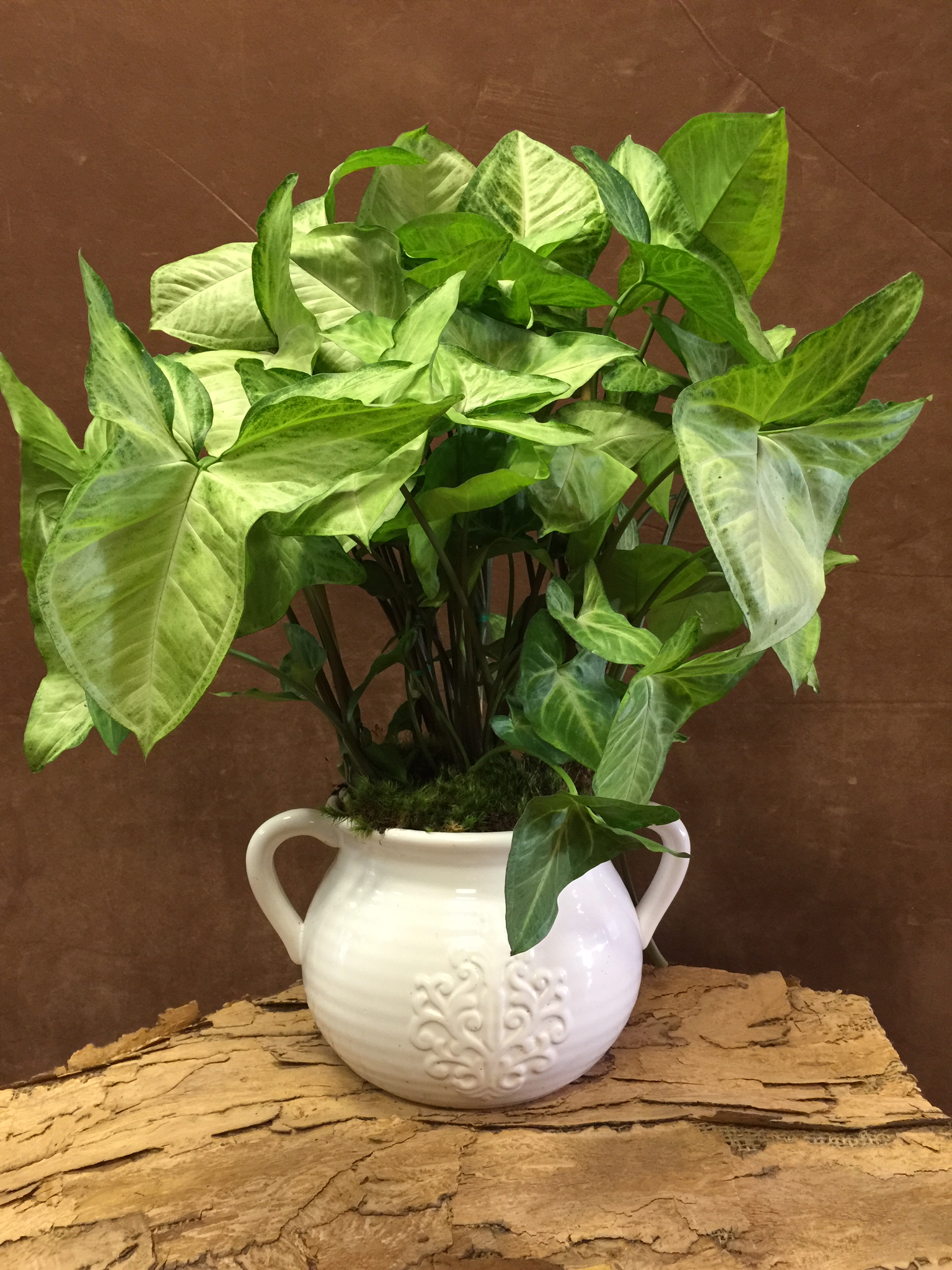 Arrow head planter pot
