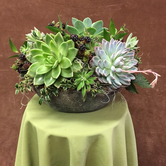 Succulent planter ceramic 1