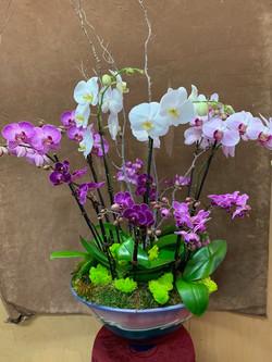 Extravagant orchid planter