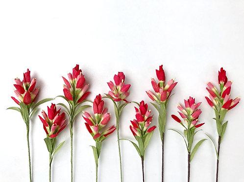 Indian Paintbrush - Single Stem