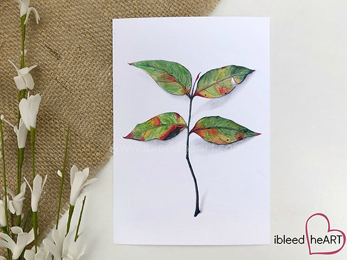 Chinese Pistache Leaf Print