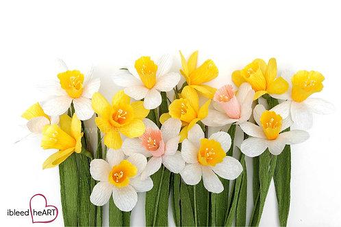 Daffodils - Single Stem