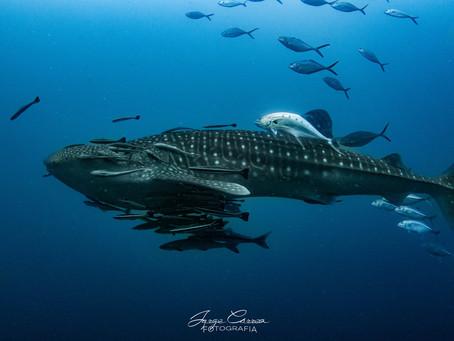 ''Happy International Whaleshark Day!!''
