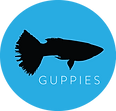 GUPPIES.png