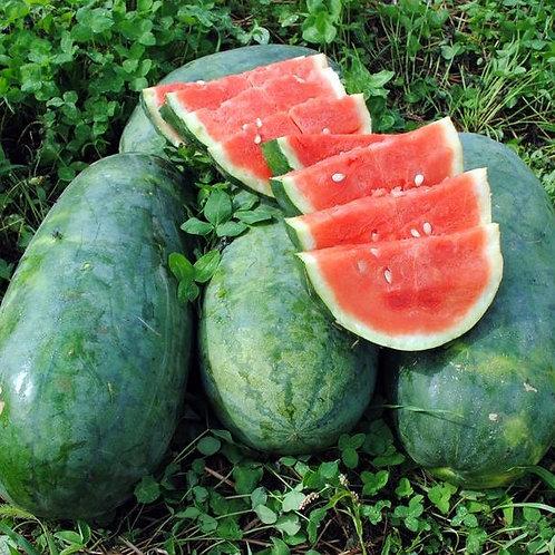 Strawberry Watermelon (Citrullus lanatus), 60 Seeds, Organic