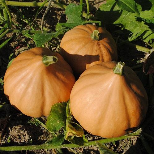 Seminole Pumpkin (Cucurbita moschata) 20 Seeds, Organic
