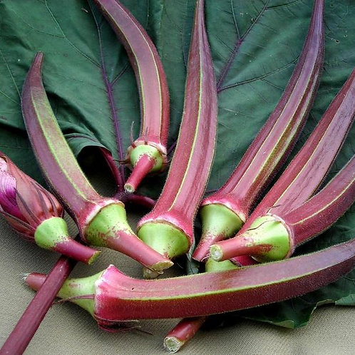 Bowling Red Okra (Abelmoschus esculentus), 70 Seeds, Organic