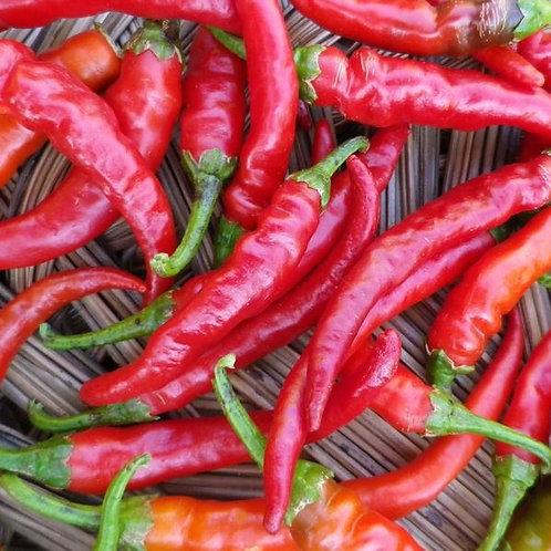 Cayenne Long Red Hot Pepper (Capsicum annuum), 40 Seeds, Organic