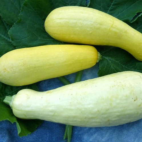 Early Prolific Straightneck Summer Squash (Cucurbita sp.), 30 Seeds, Organic