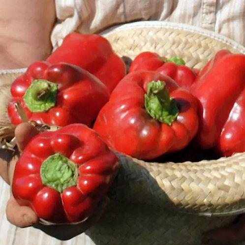 Carolina Wonder Sweet Pepper (Capsicum annuum), 60 Seeds, Organic