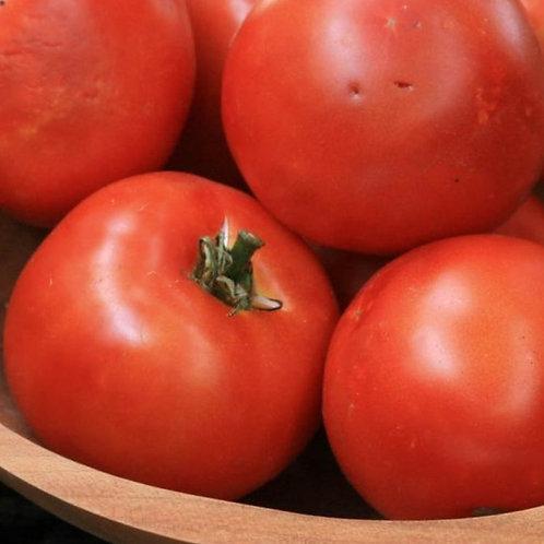 Heinz 1350 VF Tomato (Solanum lycopersicum), 60 Seeds, Organic