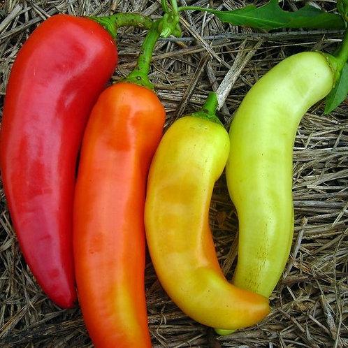 Sweet Banana Pepper (Capsicum annuum), 40 Seeds, Organic
