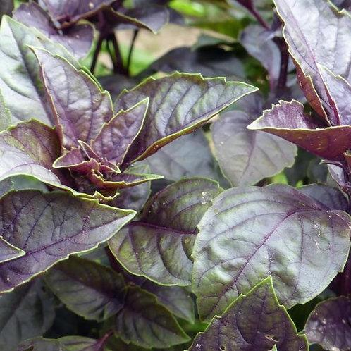 Dark Opal Basil (Ocimum basilicum), 100 Seeds, Organic