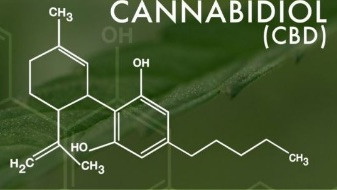 CBD Oil – behind the hype