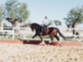 Classical Dressage, Doma Clasica, Dressage Clasique, Stage Equestre Andalousie, Clinics Doma Clasica Sevilla, Luis Moreno