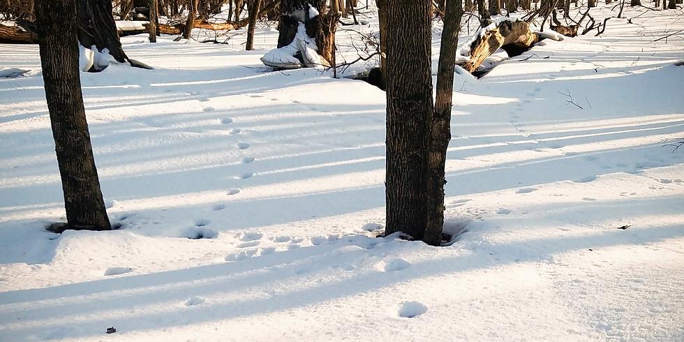 Winter Wildlife Wander