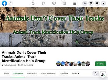animalsdontcovertheirtracks.jpg