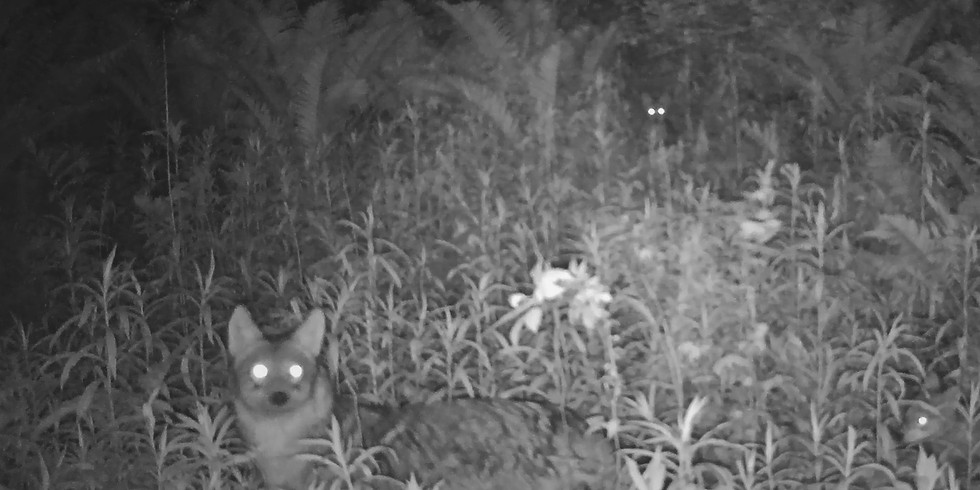 Tracking Story Night: Coyote