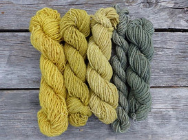 Campground dyeing happened._Left to right_  Queen Anne's lace, pre-blooming goldenrod, fireweed, blue chanterelle x 2.jpg