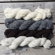 Top to bottom_ • Gotland x BFL ewe who was killed by the mountain lion.jpg