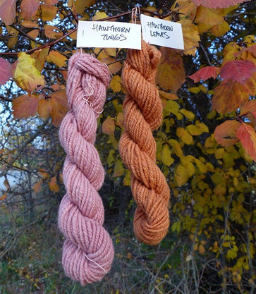 Hanging in the tree from which they were dyed.jpg