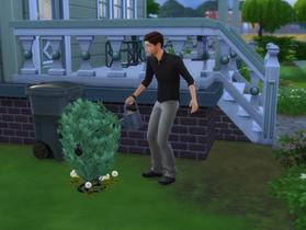 Some Last Minute Gardening