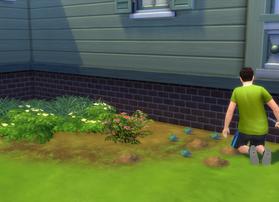 Began Planting a Garden