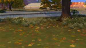 Leaves on the grass