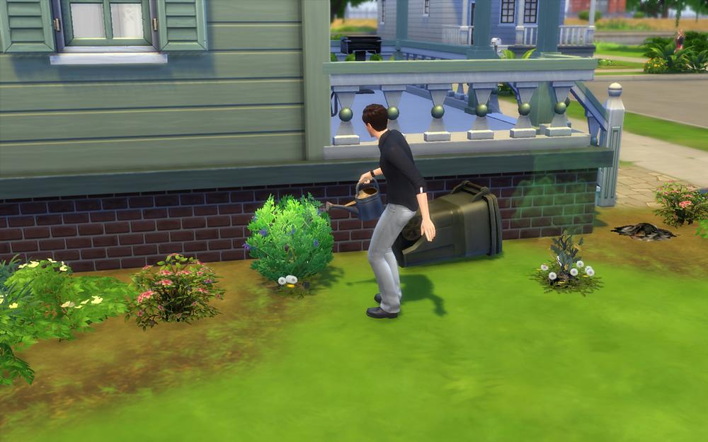 Watering My Plants