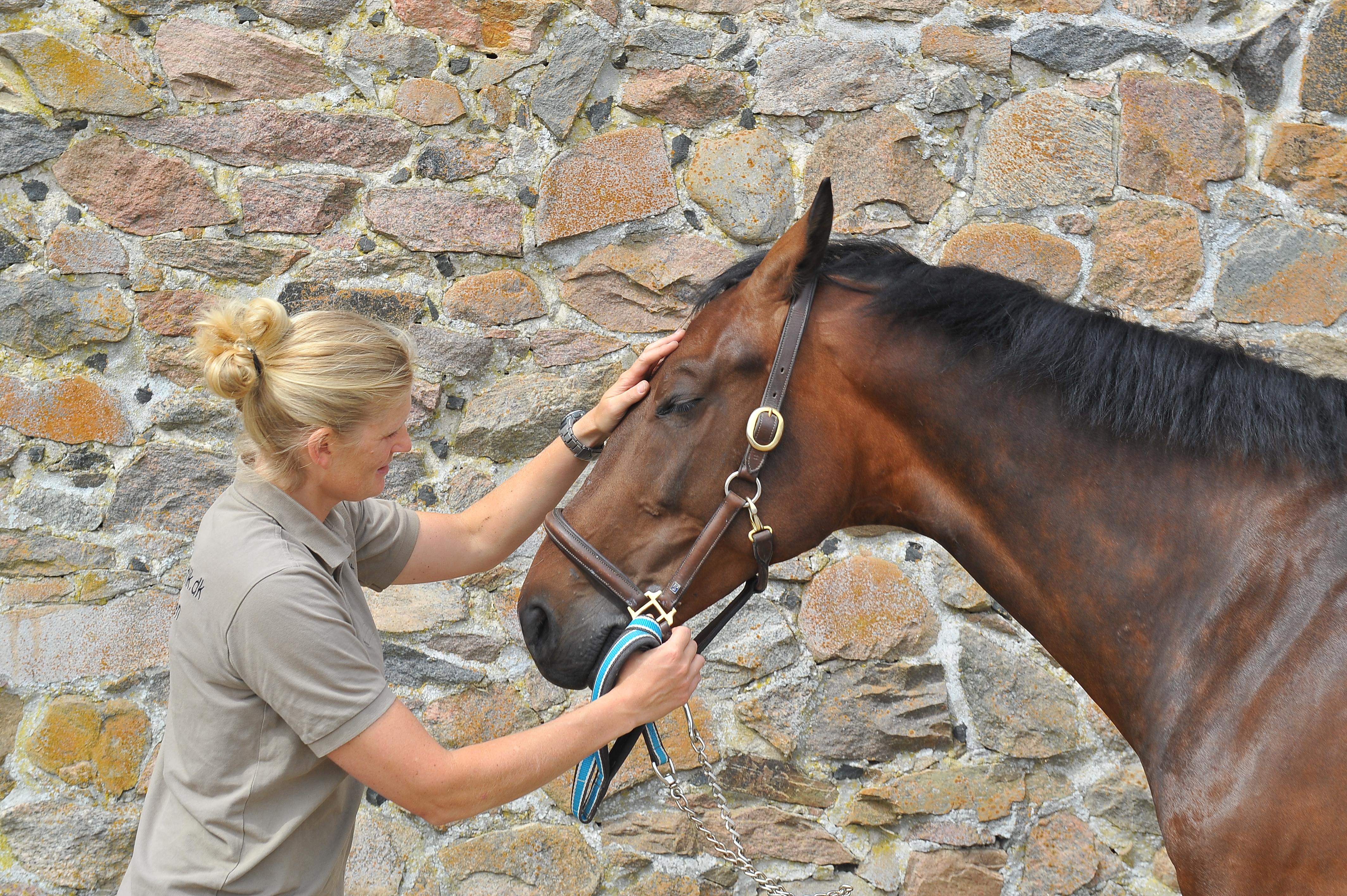 Kiropraktik hest 23
