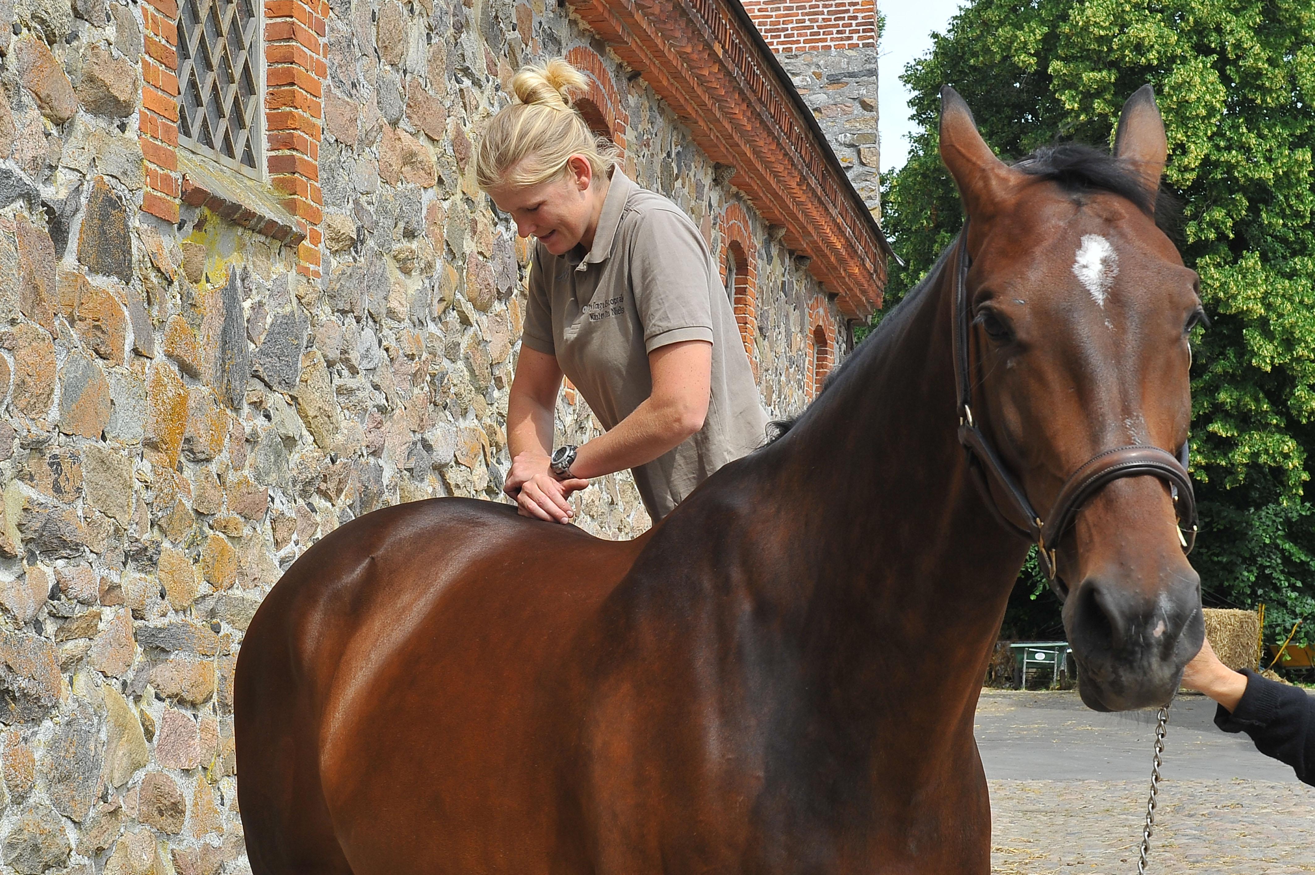 Kiropraktik hest 12