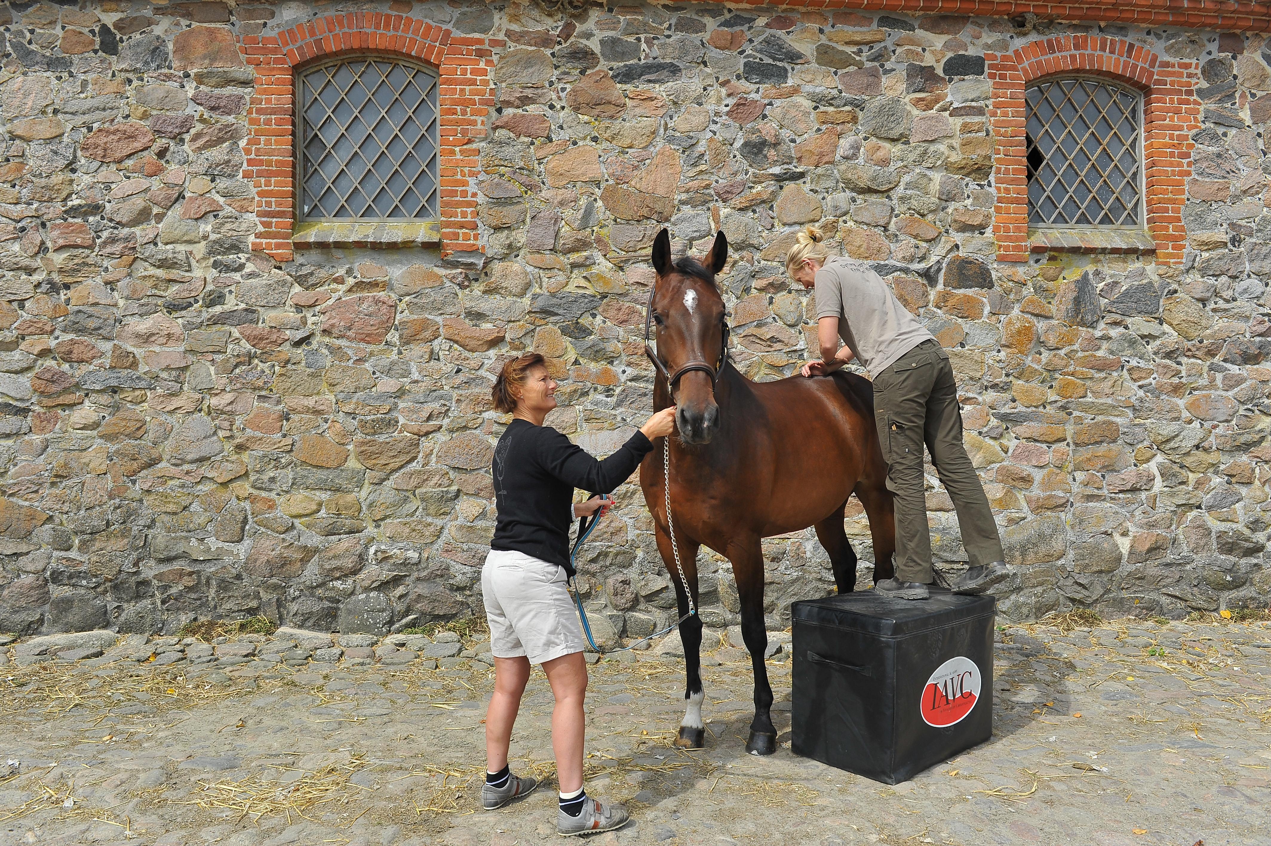 Kiropraktik hest 10