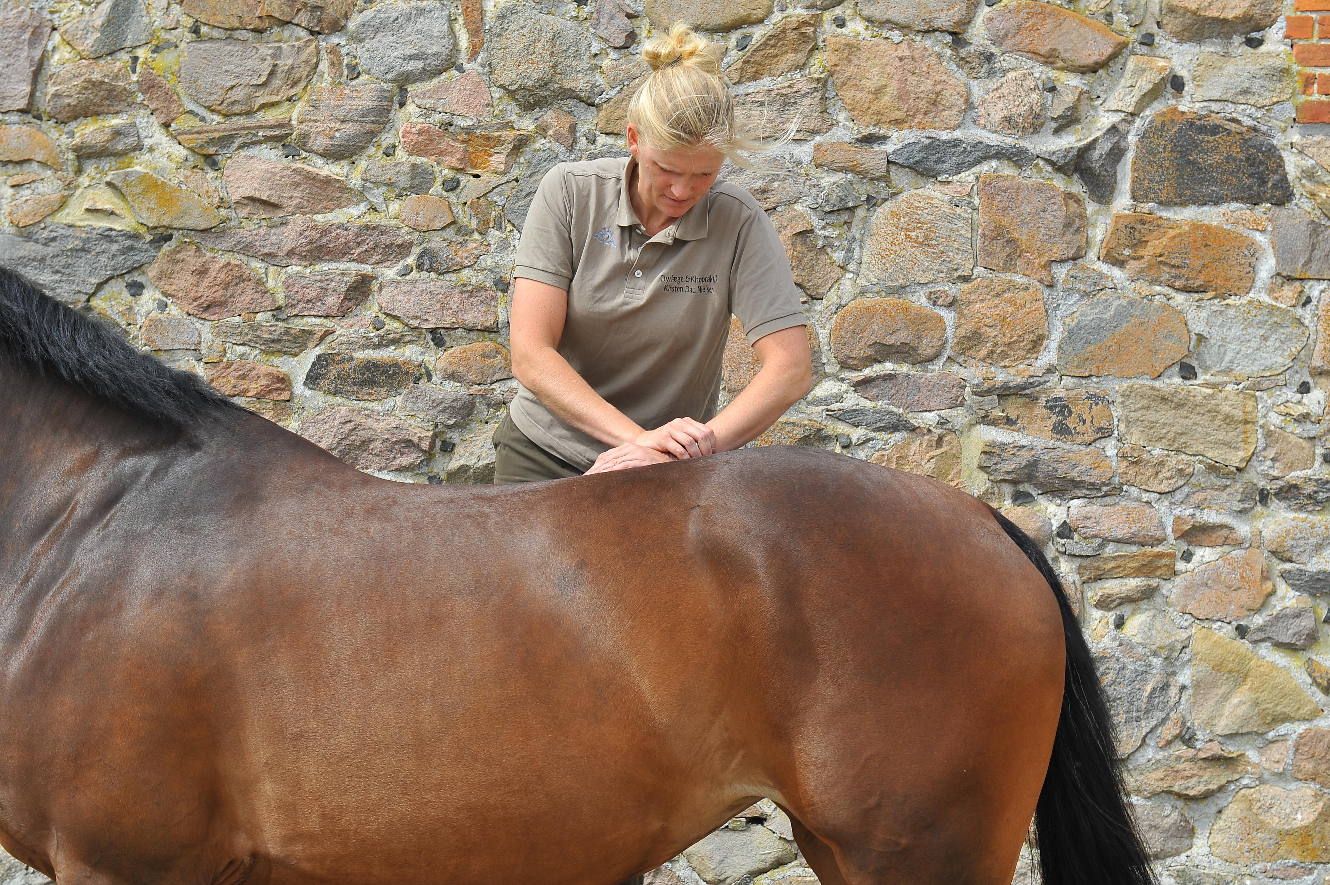 Kiropraktik hest 22