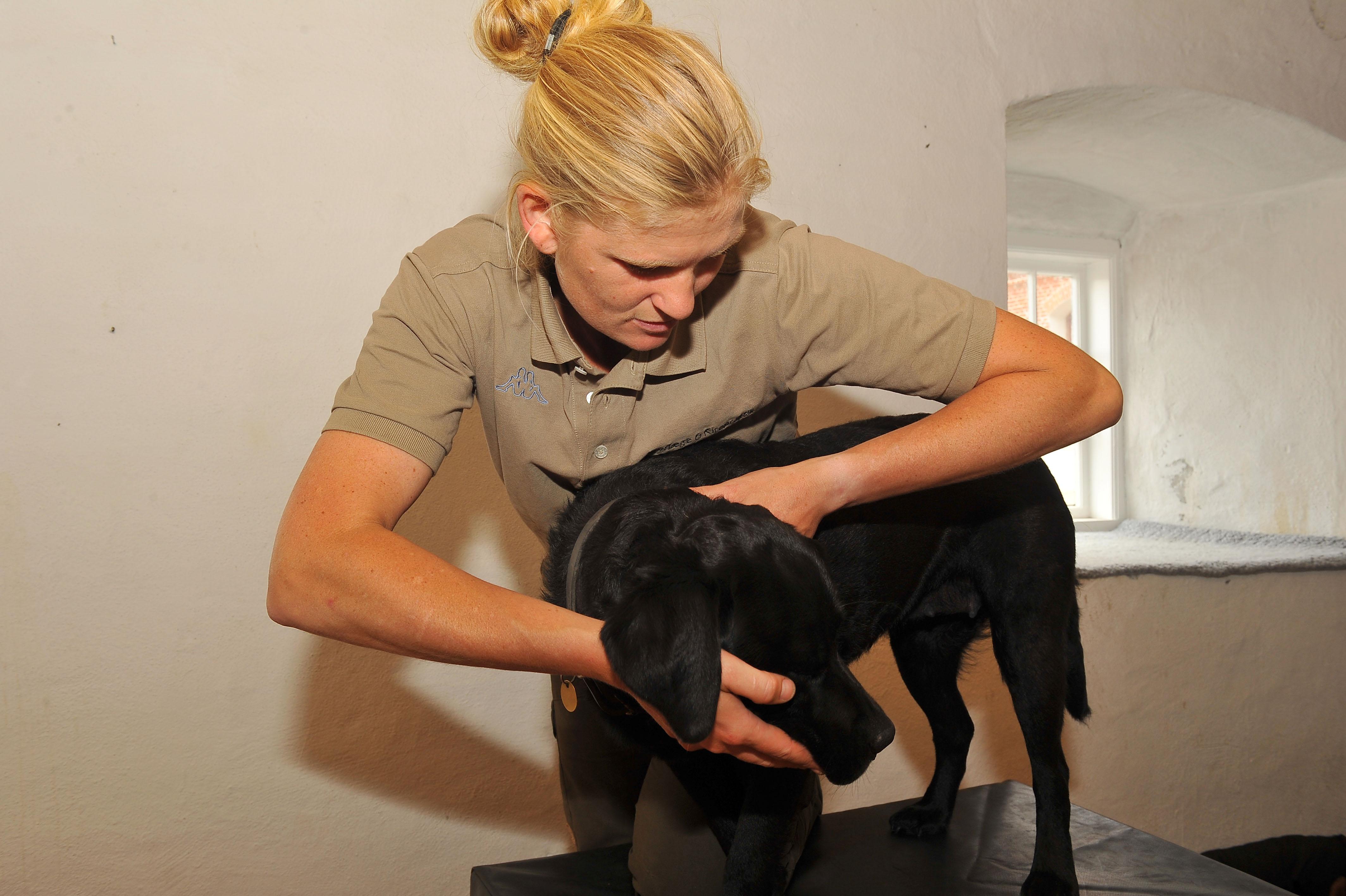 Kiropraktik hund 15