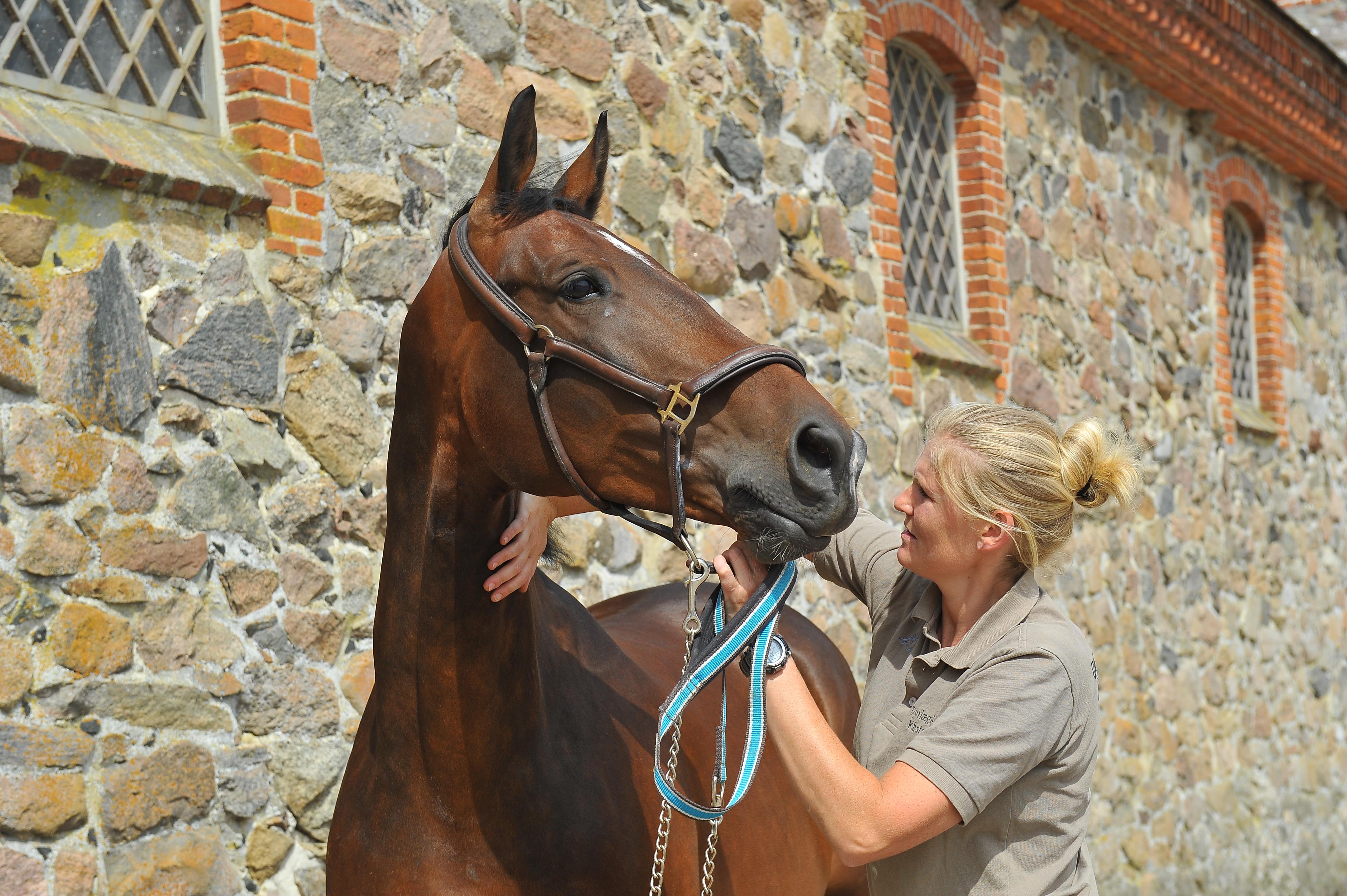 Kiropraktik hest 25