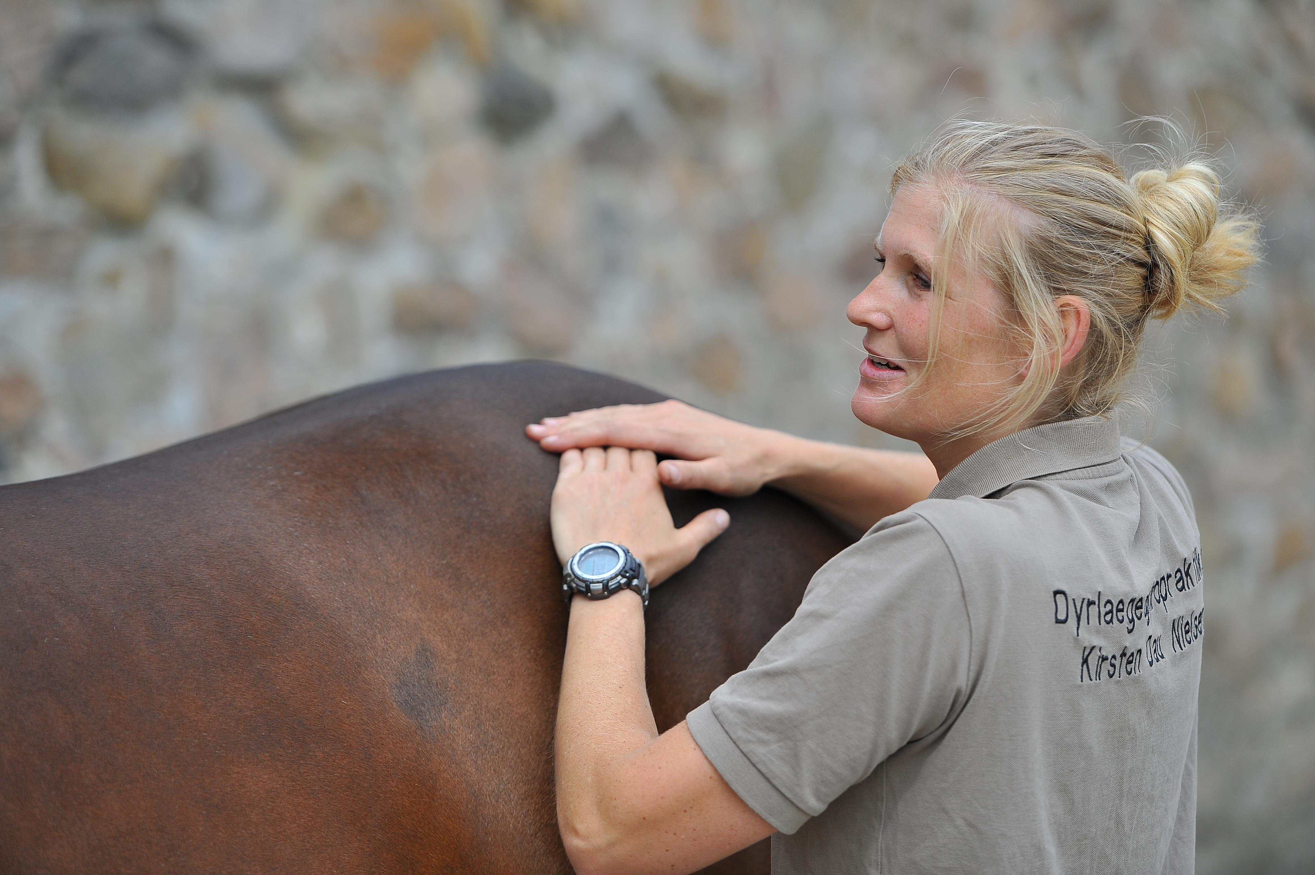 Kiropraktik hest 8