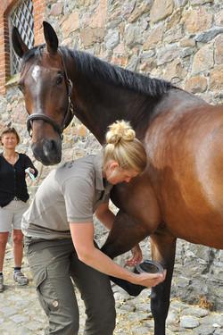 Kiropraktik hest 35