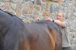 Kiropraktik hest 45