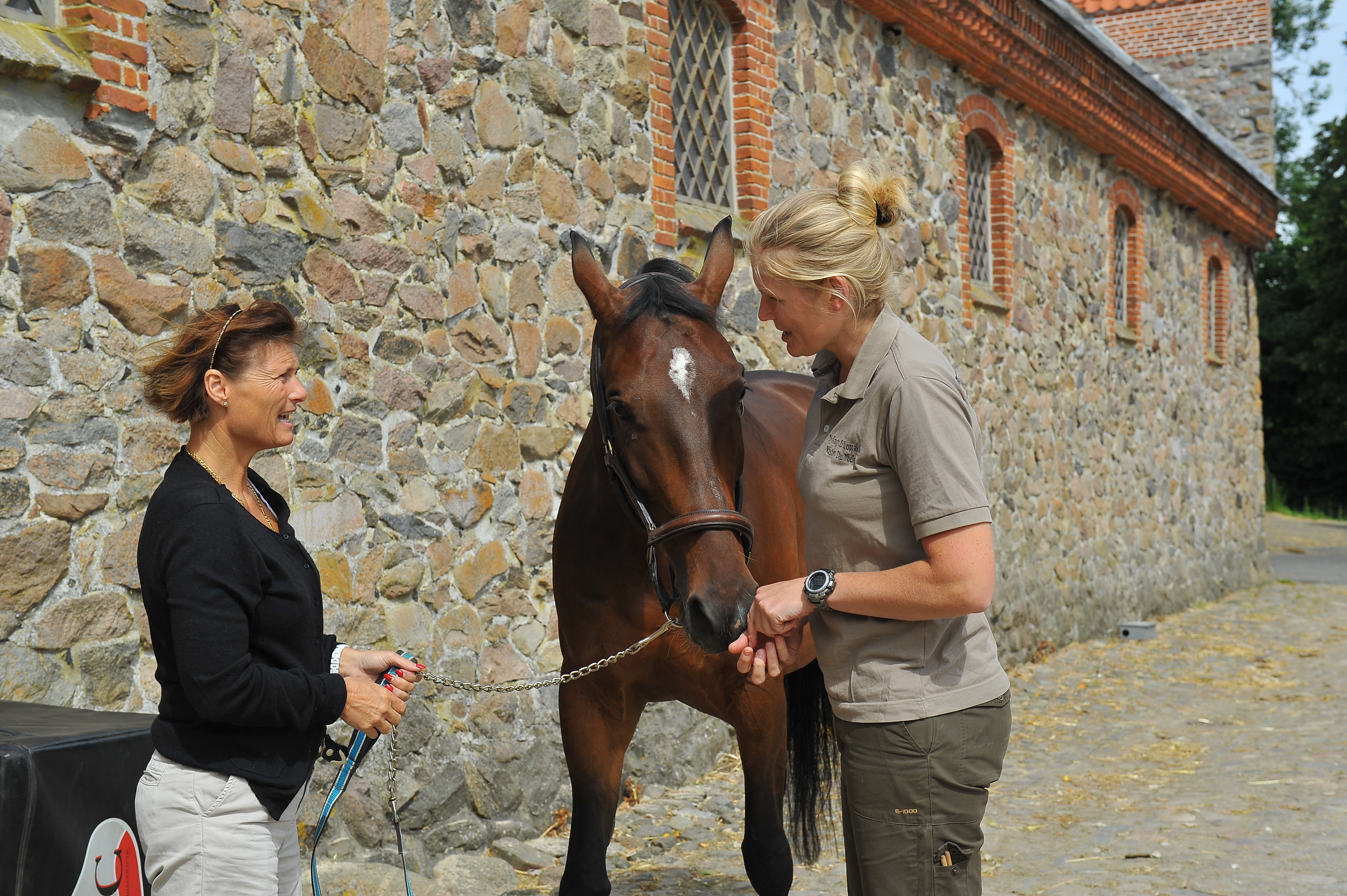 Kiropraktik hest 6