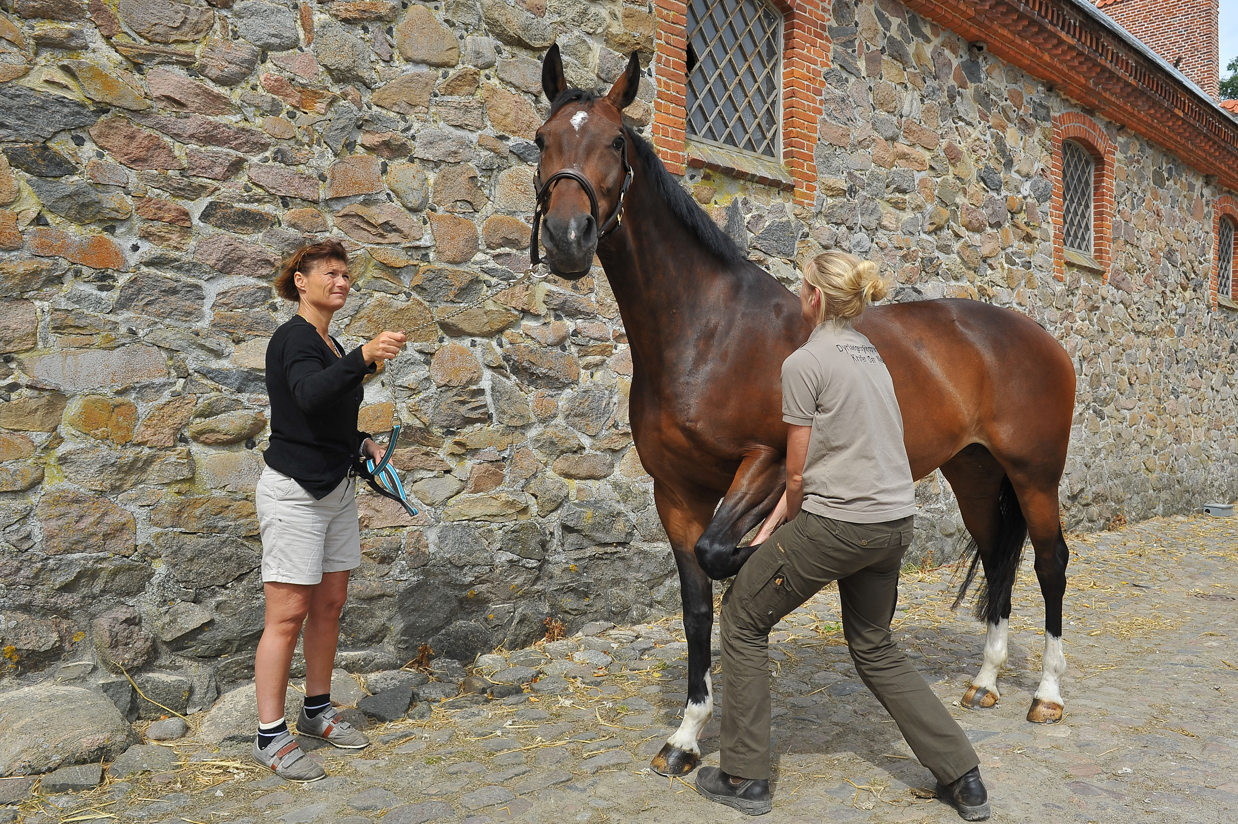 Kiropraktik hest 32
