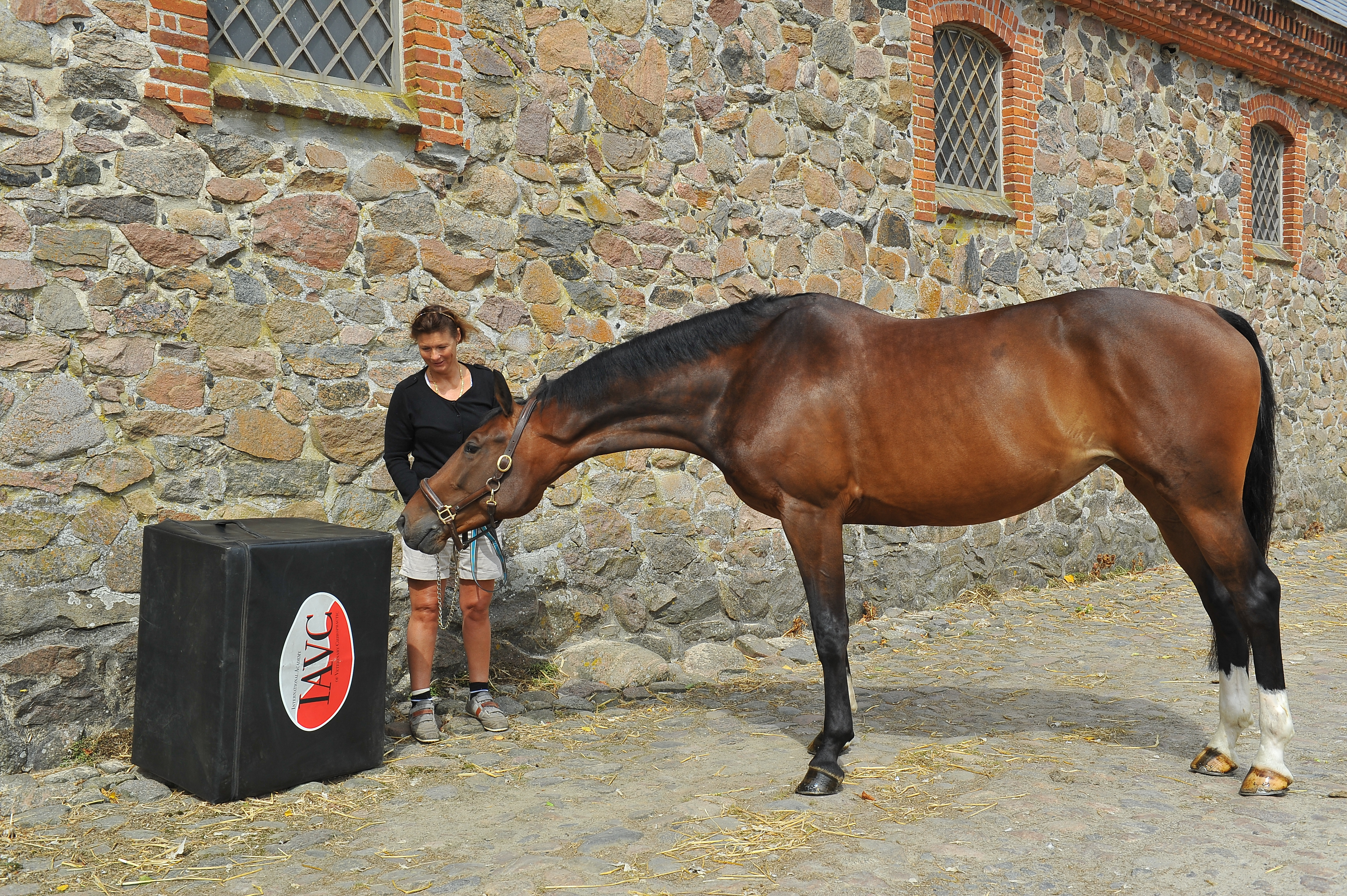 Kiropraktik hest 7