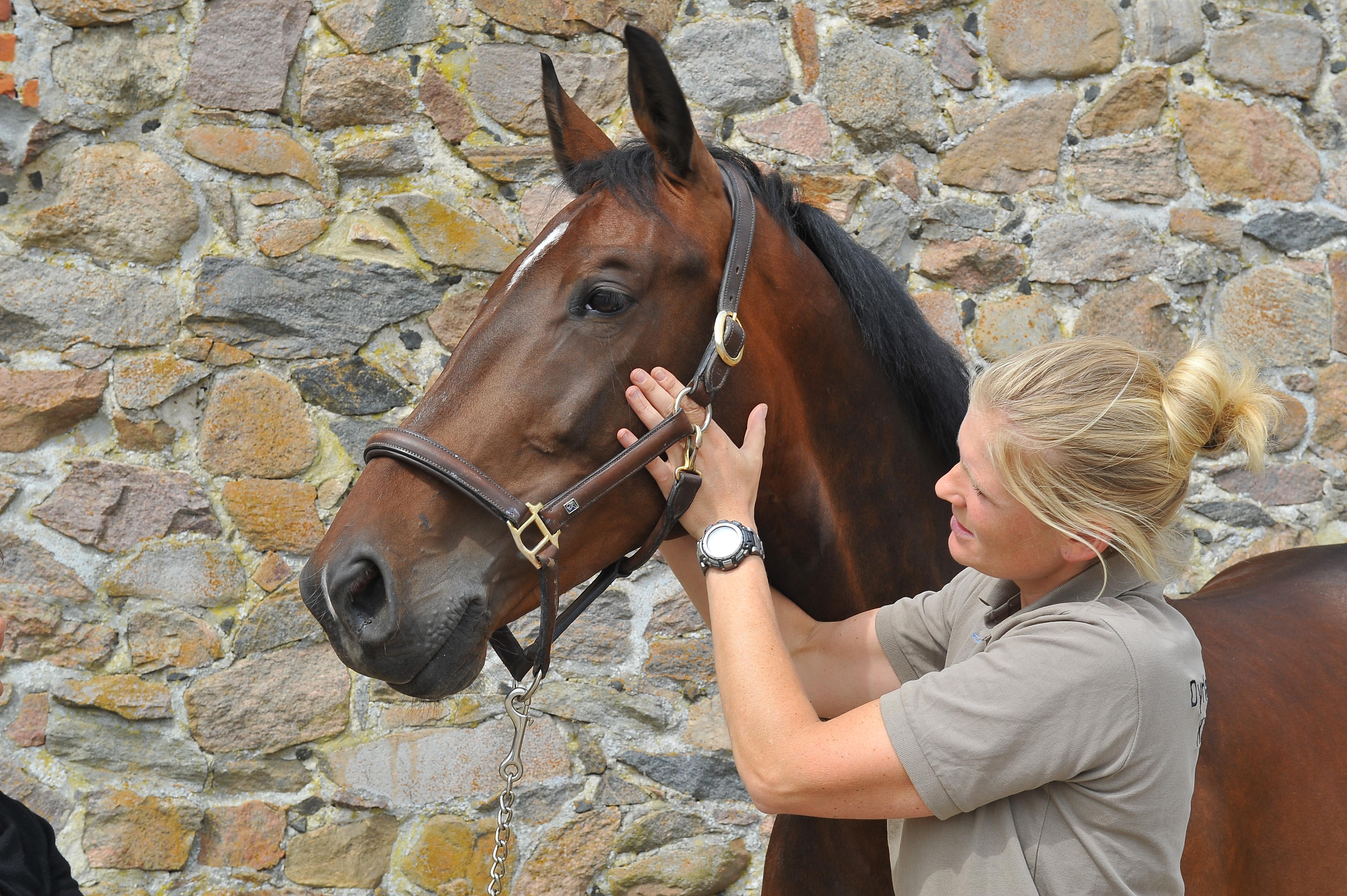 Kiropraktik hest 31