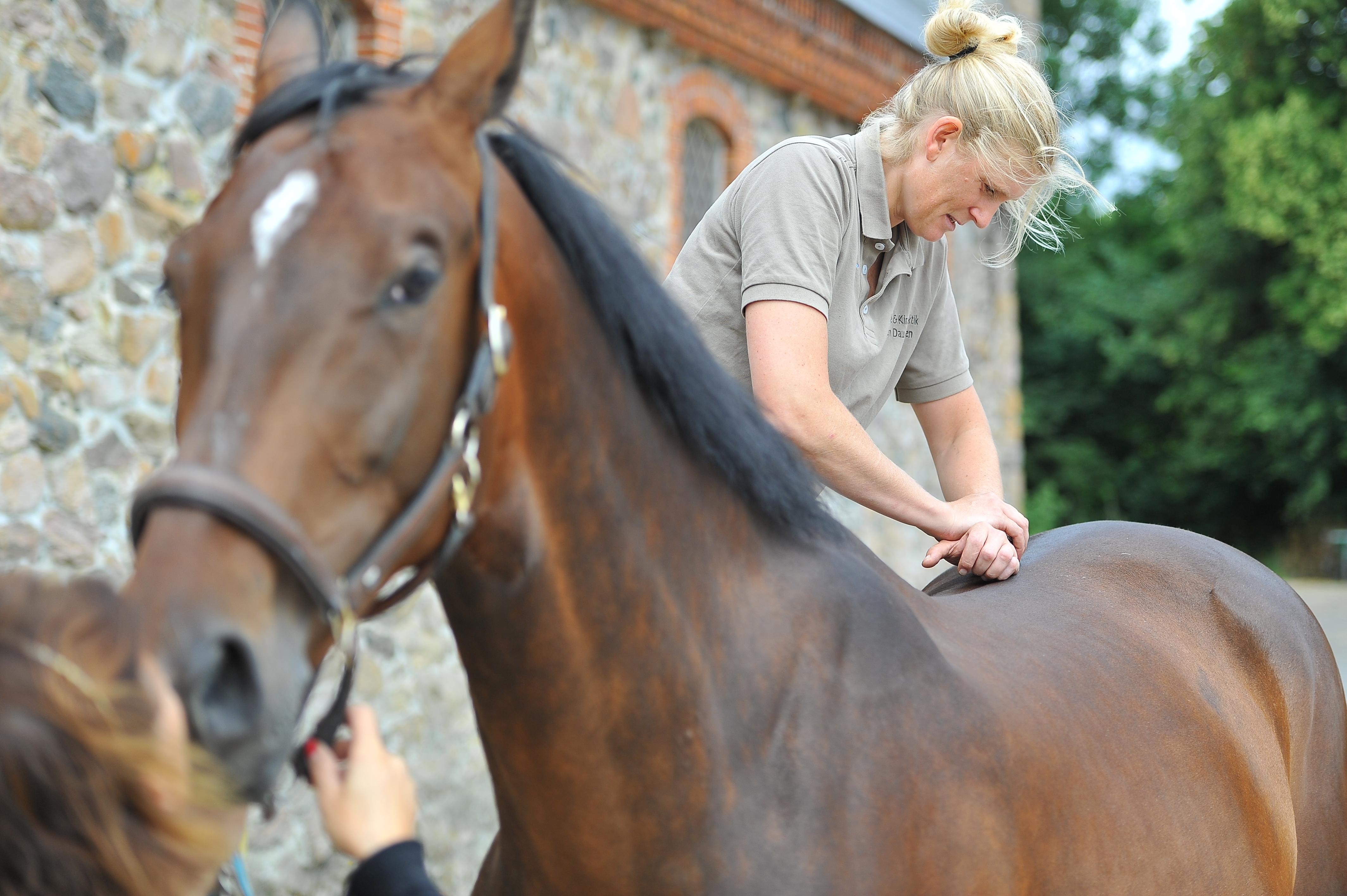 Kiropraktik hest 20