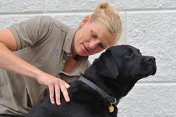 Kiropraktik hund 9