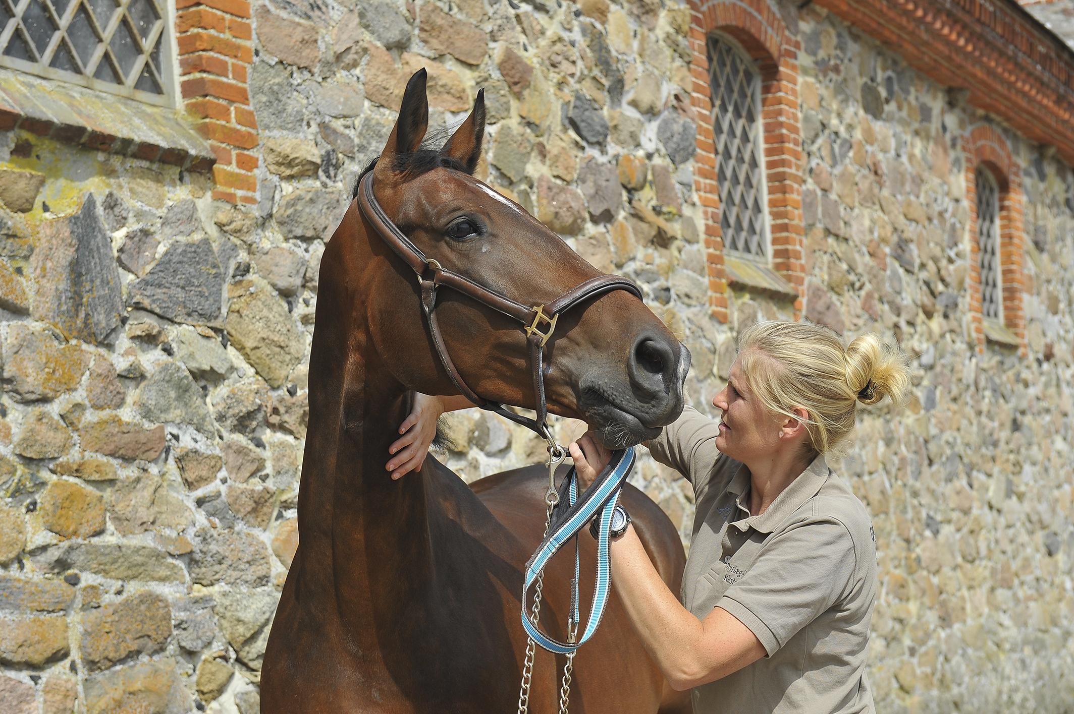 Kiropraktik hest 25_150dpi