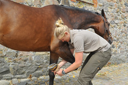 Kiropraktik hest 38
