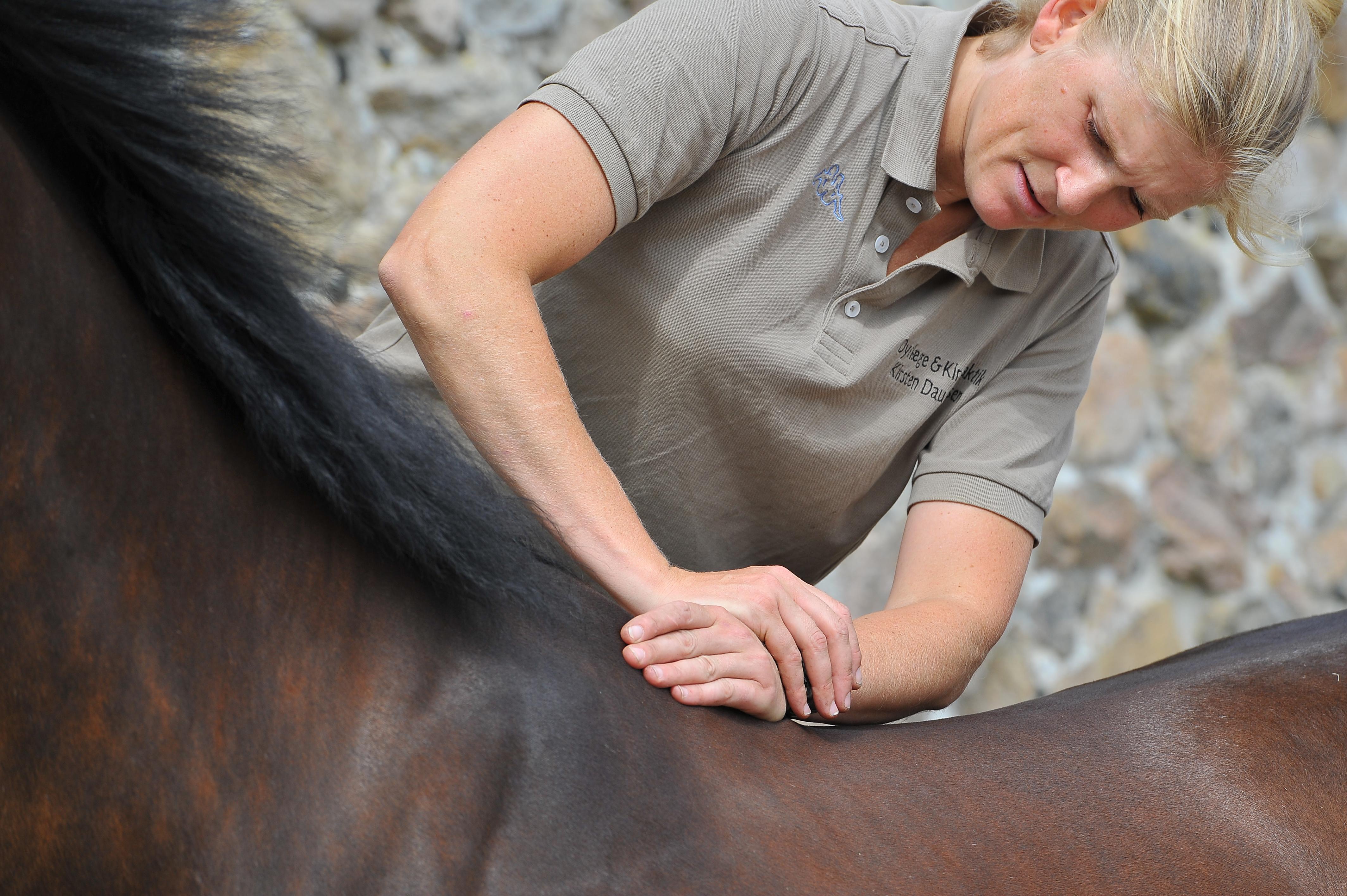 Kiropraktik hest 17